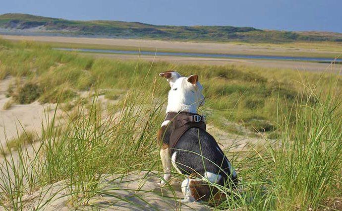 Urlaub mit Hund in Nordholland
